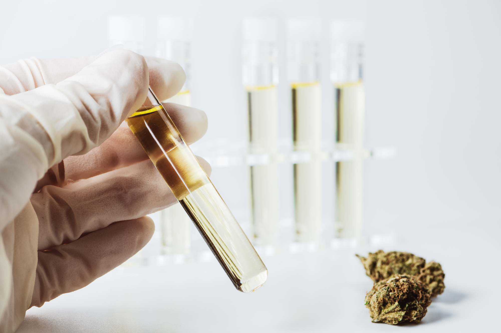 Photo of Best 10 Cannabis Oil Extraction Methods