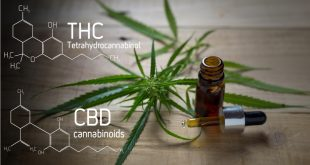 5 Key Factors to Consider While Buying CBD Product