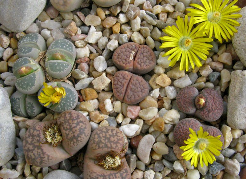 Photo of Top 15 Strangest Plants in the World