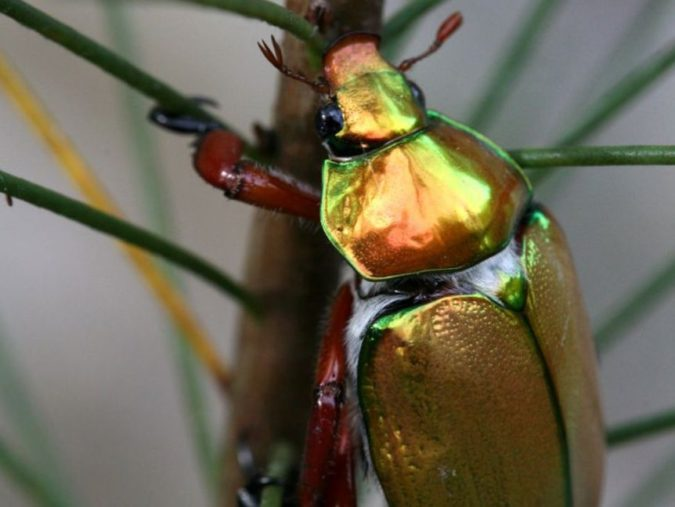 Best Colorful Insect