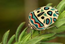 Photo of Top 10 Most Colorful Insects in the World